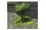 Thouars - Page 3 1x1_arbre_0_apercu