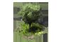 Thouars - Page 3 1x1_arbre_1_apercu