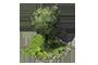 Thouars - Page 3 1x1_arbre_2_apercu