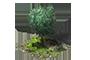 Thouars - Page 3 1x1_arbre_3_apercu