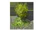 Thouars - Page 3 1x1_arbre_4_apercu